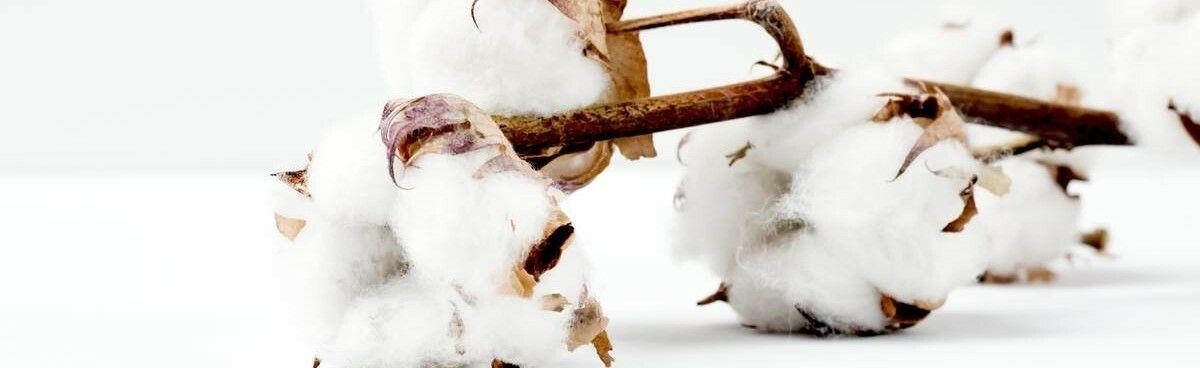 Comfyballs - Combed Aegean Cotton